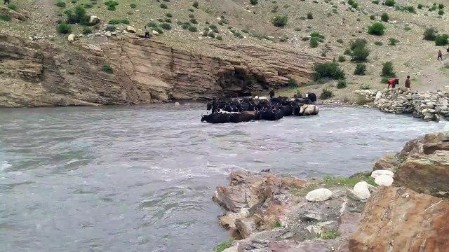 Floating yak