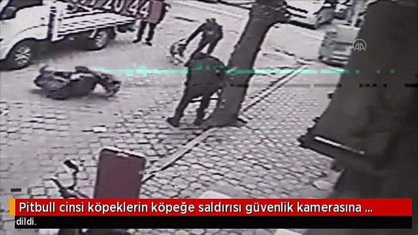 Pitbull cinsi köpeklerin köpeğe saldırısı güvenlik kamerasına yansıdı