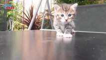 Funny, Cute, Adorable Cats And Kittens Meowing Compilation 02