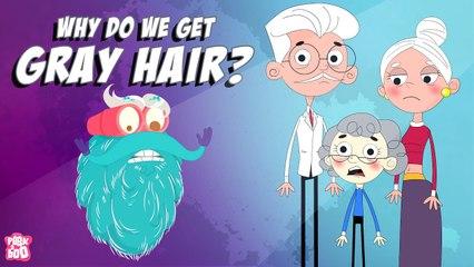 Why Do We Get GRAY HAIR?   Why Does Hair Turn GRAY?   The Dr Binocs Show   Peekaboo Kidz
