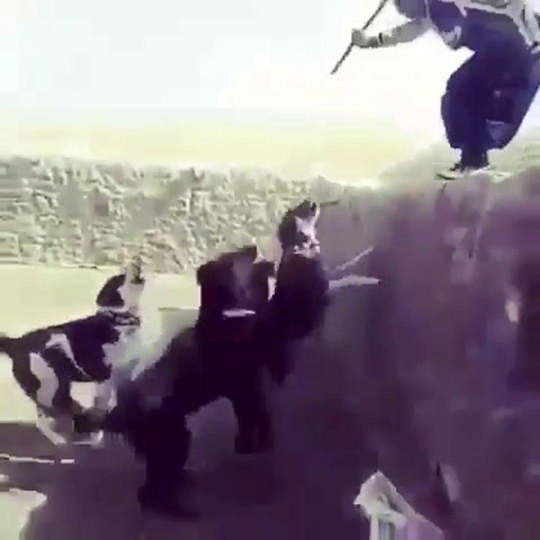 iRAN COBAN KOPEKLERiNE KISKIRTMA ViDEOSU - iRANiAN SARABi SHEPHERD DOGS