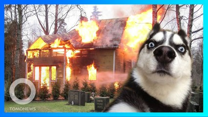 ハスキーが電子レンジに触れ民家が火事に - トモニュース