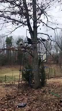 Turkeys Celebrate the End of Hunting Season
