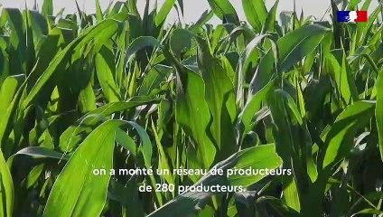 De coopérative à leader européen du maïs pop-corn : l'aventure Nataïs