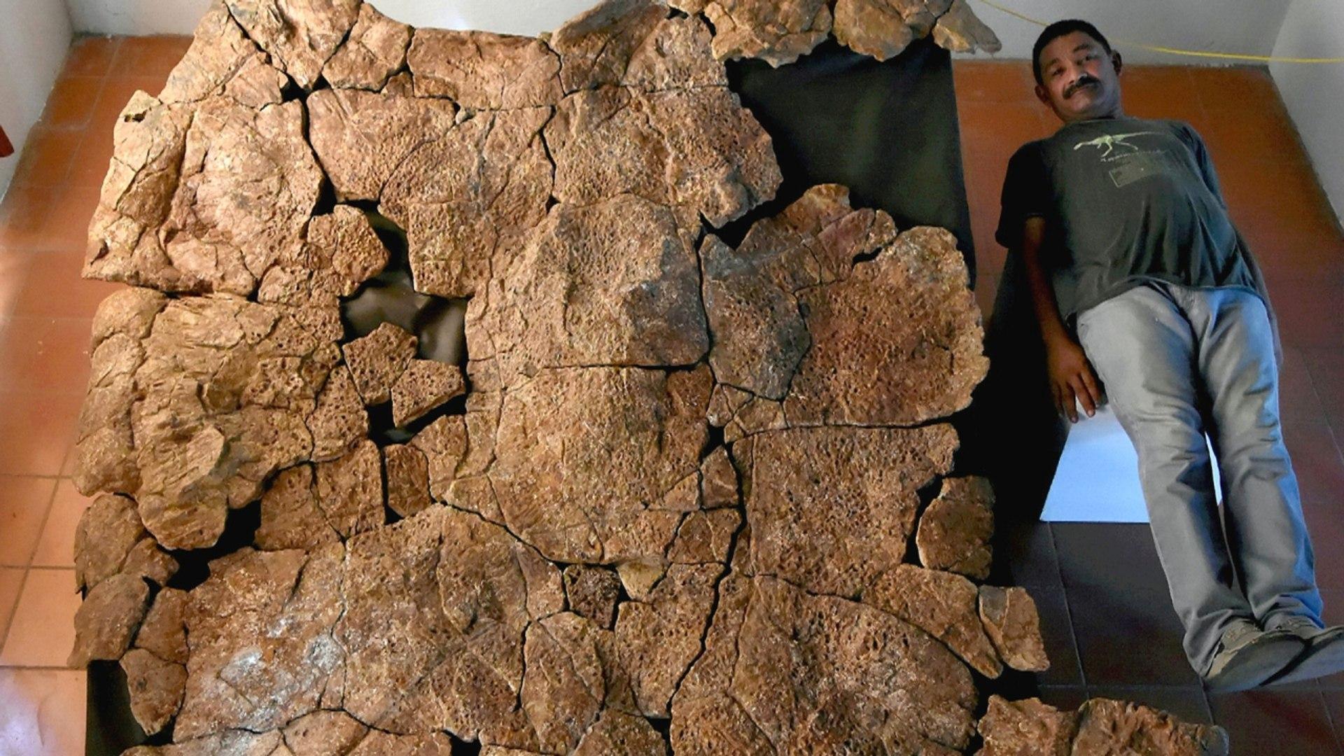 Schild van schildpad zo groot als auto opgegraven in Colombia