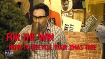 How To Recycle Your Christmas Tree - For The Win