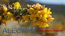 Coro Jardim Felicidade - ALECRIM