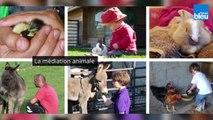 Mediation_animale