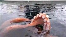Ce pecheur attrape un veritable monstre sous-marin