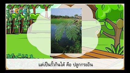 สื่อการเรียนการสอน นอกเมือง ในกรุง ป.3 ภาษาไทย