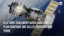 La laitue qui pousse sur l'ISS est aussi nutritive que celle cultivée sur Terre