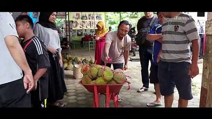 Durian Boneng Banyuwangi: Daging Buahnya Tebal, Melebihi Montong
