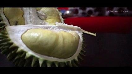 Durian Bungkik Lumajang, Dagingnya Tebal meski Bentuknya Tak Sempurna