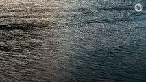 Une forme primitive de réseaux sociaux a permis à des animaux marins de dominer les océans