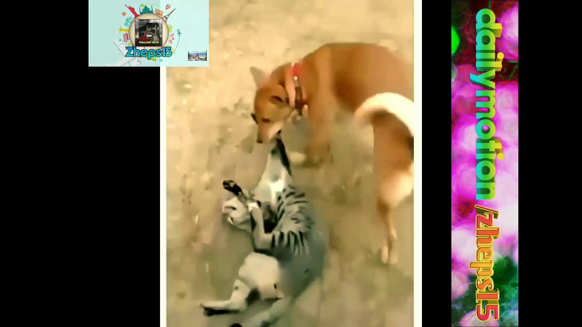 Cats lover funny cats