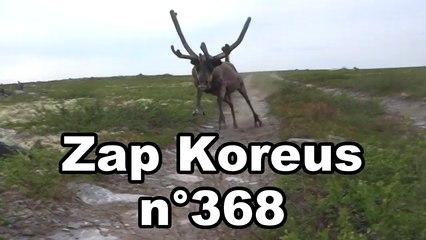 Zap Koreus n°368
