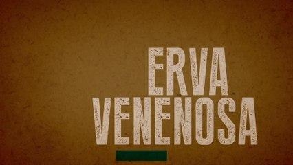Valentina Francisco - Erva Venenosa