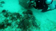 Divers Rescue a Trapped Stonefish