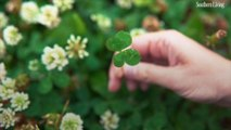 37 St. Patrick's Day Quotes To Celebrate The Luck of The Irish