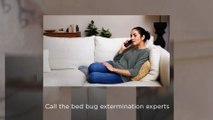 A1 Bed Bug Exterminator Atlanta