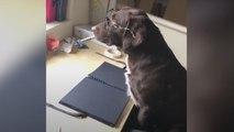 Ces chiens rappellent les précautions à prendre contre le coronavirus