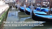 Venice canals clearer due to lack of tourists and traffic