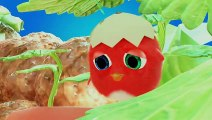 CucKoo Cartoon  Cuckoo Chicken 2020 - Part 3  Funny Cartoon for kids 2020