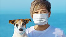 How To Care For Your Pet During The Coronavirus Outbreak