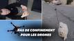 Pendant le confinement, les drones peuvent tout faire, même promener votre chien