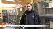 L'Avenir - Coronavirus : comment ça se passe dans un refuge pour animaux