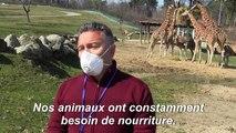 Coronavirus: un zoo italien s'inquiète pour ses animaux suite à sa fermeture