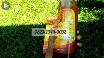Recommended!!! +62 823-2944-0002 | Madu Perhutani Murni