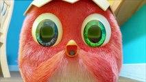 ✅ Pájaro Cucú #36 | Dibujos Animados en Español | Compilación De Dibujos Animados Infantiles