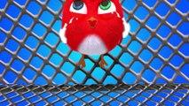 ✅ Pájaro Cucú #33 | Dibujos Animados en Español | Compilación De Dibujos Animados Infantiles