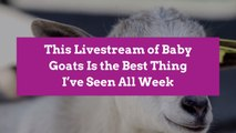 This Livestream of Baby Goats Is the Best Thing I've Seen All Week