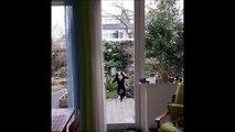 Hilarant : ce chat veut absolument rentrer chez lui