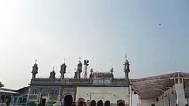 Flock of birds swarmed around the shrine of Hadrat Sultan Bahoo R.A.