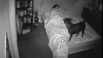 CCTV Bossy the Psychic Dog Senses Ghost Haunted Paranormal Activity Footage