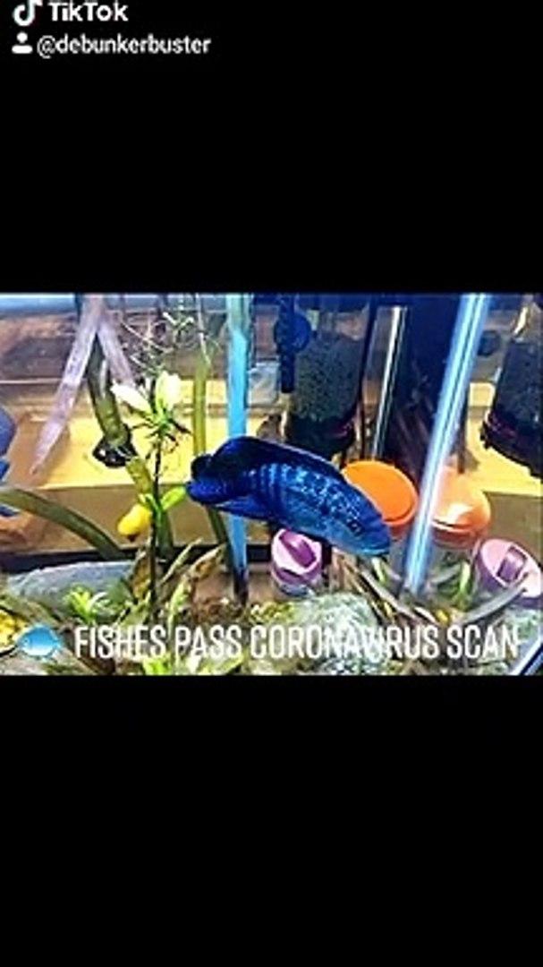 Fishes pass coronavirus scan