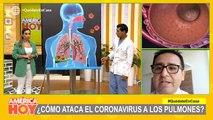 ¿Cómo ataca el coronavirus a los pulmones?