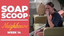 Neighbours Soap Scoop! Finn Kelly aftermath revealed