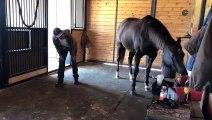 Il fait du Yoga avec son cheval... équitation en mode ZEN