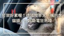 petmao_nownews-copy1-20200325-12:15
