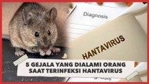 5 Gejala yang Dialami Seseorang Apabila Terinfeksi Hantavirus