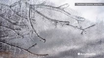 Breathtaking photos of ice coating trees in the Poconos