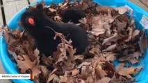 These Bear Cubs Playing In Leaves Will Take You Back To Good Old Fall Days