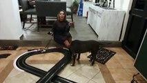 Ana María Alvarado nos aconseja cómo reducir el estrés en nuestra mascota durante la cuarentena