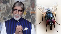 मक्खी से भी फ़ैल सकता है Virus संक्रमण,  Amitabh Bachchan का Video हो रहा है Viral | Boldsky