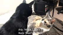 We were good friends before, but a fight broke out between Kuro and Goma.
