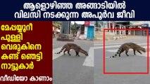 Rare animal found in Kozhikkode District : Oneindia Malayalam